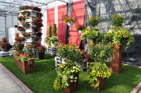 Flower Trials bei Bongartz
